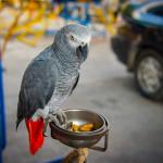 Parrot in Klong Toey Slum