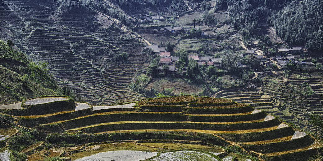 Vietnam tired rice farming