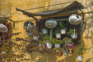 Beautiful Vietnamese window garden