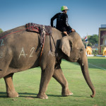 King's Cup Elephant Polo